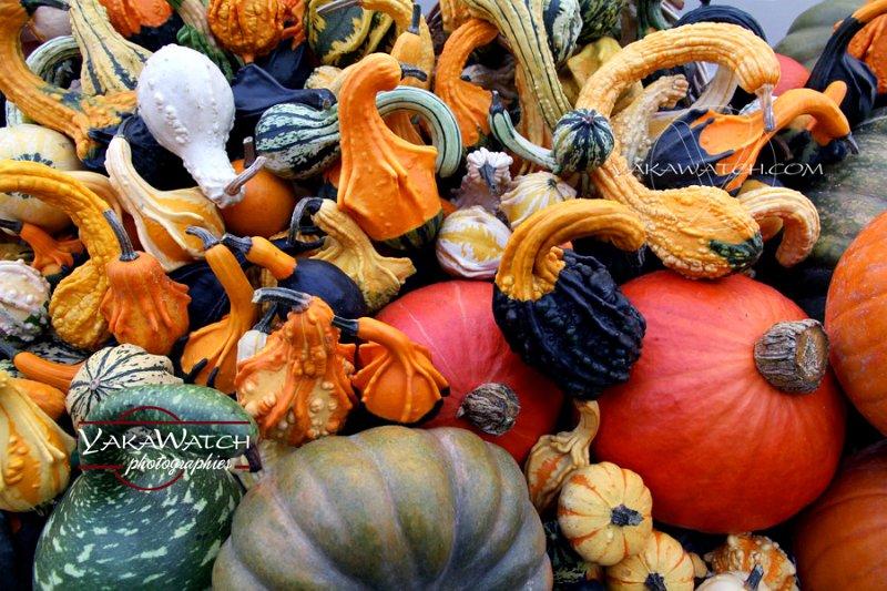 Art de Vivre - Légumes d'Halloween